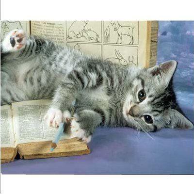 citations sur les chats bonheur de lire. Black Bedroom Furniture Sets. Home Design Ideas
