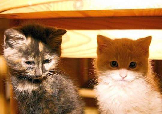 Image du Blog amourdechats.centerblog.net